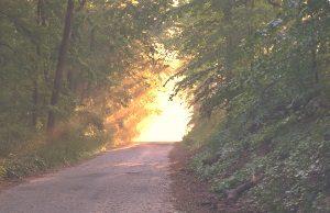 Ein Waldweg steigt leicht an und führt zur einer Lichtung, die freundlich, hell und warm erscheint